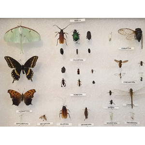 Quick-pix B : 20 Insects kit
