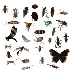Student Collection : 30 insect Kit