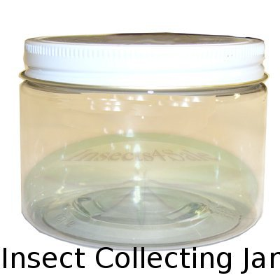 Insect Collecting Jar