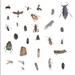 Customized to State Collection : 20 insect Kit - qpb-112015-customized to state